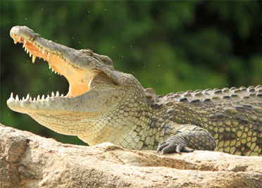 6 Days Uganda Wildlife Safari to Kidepo Valley and Murchison Falls
