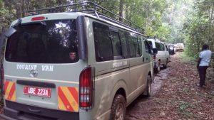 uganda chimpanzee trekking safari
