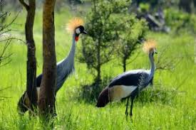 2 Days Lake Mburo Uganda Birding Safari Uganda Tour / 2 Days Uganda Birding Safari In Lake Mburo Park With Epic Culture- Uganda Safari News