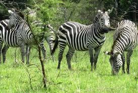 5 Days Uganda Wildlife Tour to Kidepo Valley