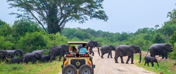 4 Days Murchison Falls Safari / 4 Days Uganda Wildlife Safari in Murchison Falls National Park