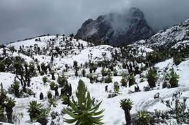 6 Days Rwenzori Hiking Safari Uganda Safari / 6 Days Uganda Hiking Safari to Rwenzori National Park